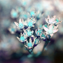 blaue Blüten von Jens Berger