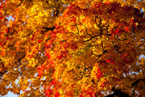 prächtige Herbstfarben by Daniel Kühne