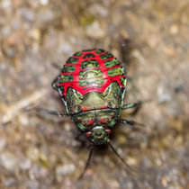 colorful beetle von Craig Lapsley