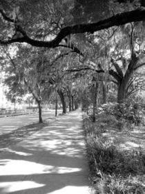 Sidewalk Forsyth park  by O.L.Sanders Photography