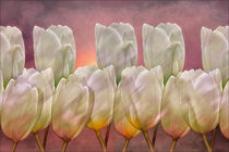 Tulip-abstract2