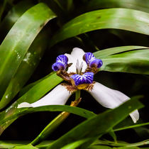 pretty wild orchid by Craig Lapsley