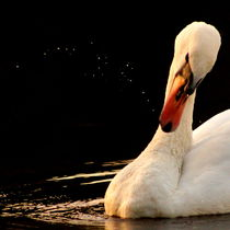 Swan-producing-a-universe