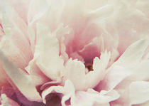 Peony I by Sybille Sterk