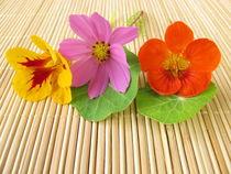 Strauß mit essbaren Blüten von Heike Rau