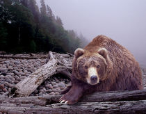 Some Days You Eat the Bear, Some Days the Bear Eats You by Randall Nyhof