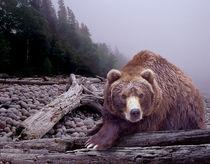 Anl-bear-some-days-you-eat-the-bear-dot