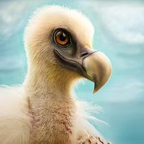 griffi by photoplace