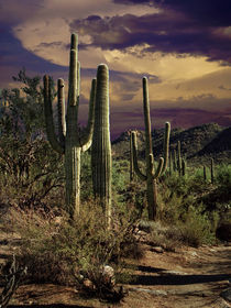 Cactuses in Saguaro National Park No 0006 von Randall Nyhof