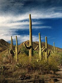 Ldsp-saguaro-catuus-pyramid-2-rp