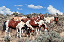 Feral Horses in the Oregon Desert by Kathleen Bishop
