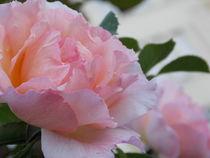 Soft Roses by bebra von bebra