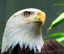 American  Bold Eagle by Maks Erlikh