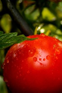 A-little-bit-of-water-make-tomatos-smile