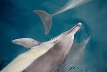 Under-water-beauties-org