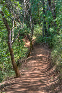 Trail To Hidden Falls by agrofilms