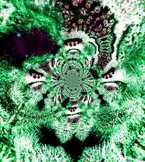 Phidippus green polar by Rainar Nitzsche
