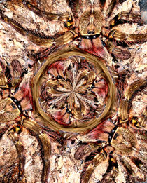 Poeci radial by Rainar Nitzsche