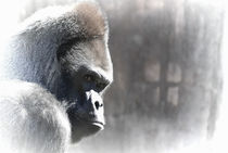 Ape-dream-org