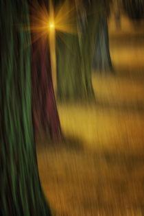 The-rainbow-forest-3