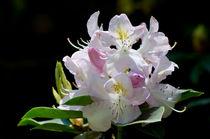 Erhabene Schönheit von lisa-glueck