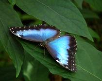 Butterfly04