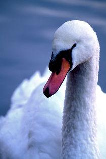 724af-swan-eye-022393-004-rv-16-v-20-v-23
