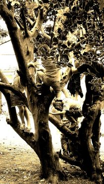KIDS IN TREES by Chrissy Woodhouse