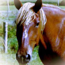 Brown Horse Portrait von Maggie Vlazny
