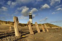 Spurn Coast by Sarah Couzens