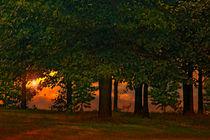 SUNSET THROUGH THE FOREST von tomyork