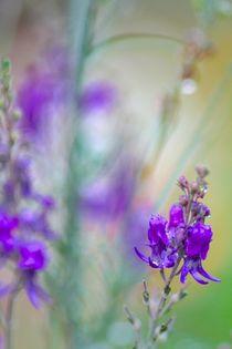 ART OF NATURE von © Ivonne Wentzler