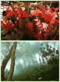 Ansicht1-madeira-1998