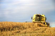 Cutting the corn von Rob Hawkins