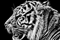 Tiger Art by Sam Smith
