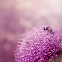 Beauty-and-the-bee-10-x-10