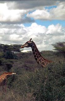 giraffe by Lore Müller