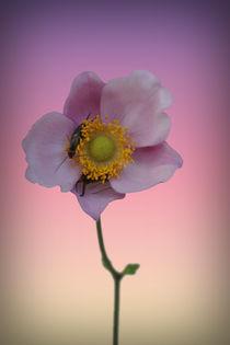 Blütenknipser by Bastian  Kienitz