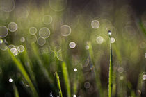 Soap-bubble-bokeh