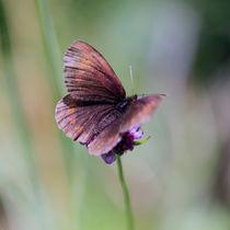 Schmetterlin von Jens Berger
