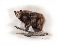Brown Bear by Linda Ginn