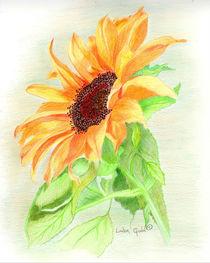 Sunshine-on-a-petal