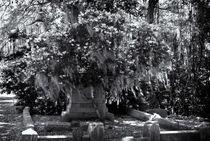 Bonavantura Cemetery, Savanna, GA by Ken Dvorak