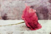 Deko Mohn/Poppy Flower von Priska  Wettstein