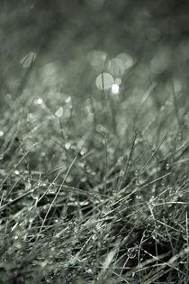 Grastropfen by Bastian  Kienitz