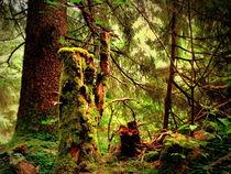 Waldgeister von Ulrike Ilse Brück