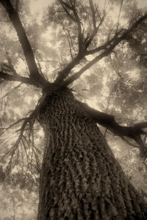 sepia tree by Péter Fodor