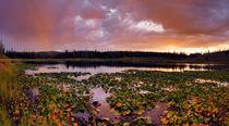 Lily Lake von Leland Howard