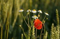 Blumen-1009-ch-druck