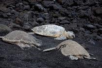 Turtles by morten larsen